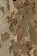 Bark (222289868).jpg