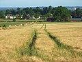 Barley, Cookham - geograph.org.uk - 910782.jpg