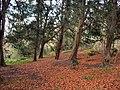 Barton Stacey - Barton Wood - geograph.org.uk - 1060509.jpg