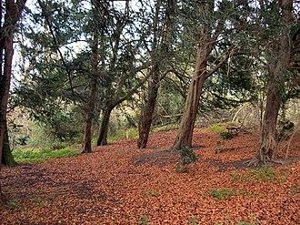Barton Stacey - An autumnal Barton Wood