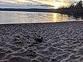 Beach at Lac Saint-Bernard with a duck at sunset.jpg