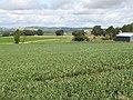 Bean field, Forthar - geograph.org.uk - 1439893.jpg