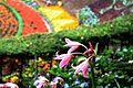Beautiful Asparagales at Ooty Botanical Garden.jpg