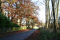 Beeches at Market Stainton - geograph.org.uk - 620544.jpg