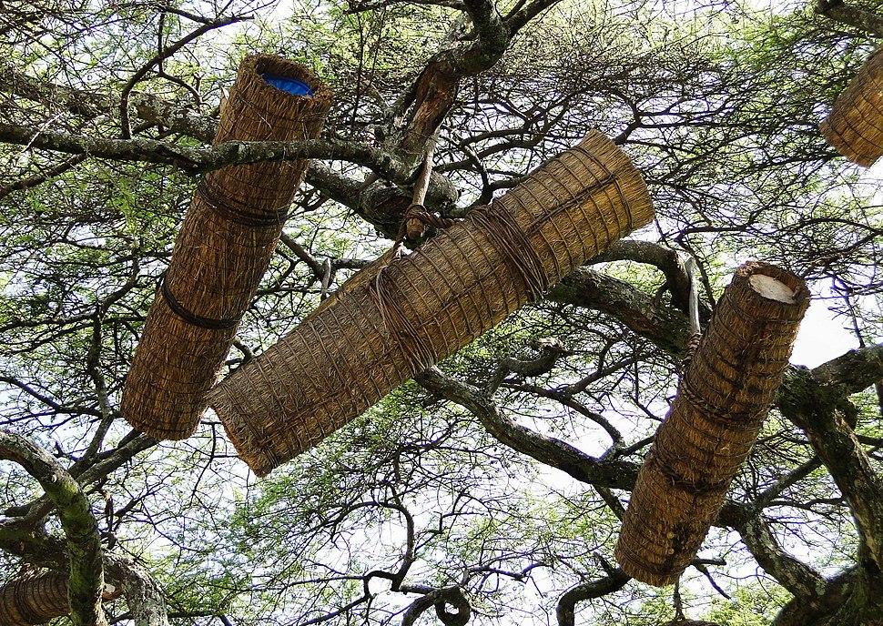 Beehives in Ethiopia