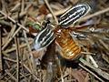 Beetle (5416831820).jpg