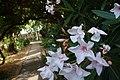 Beit-Oren תערוכת צילומים – בית אורן שלי (31).JPG