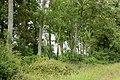 Belt of trees beside farm track (1) - geograph.org.uk - 1348589.jpg