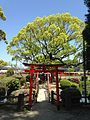 Benzaiten Shrine in Kashii Shrine 20150426.jpg