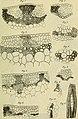 Berichte der Deutschen Botanische Gesellschaft (1884) (19743801314).jpg