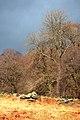Beside Aira Beck - geograph.org.uk - 1222821.jpg