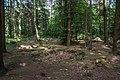 Bienwald-3587.jpg