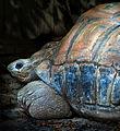 Big turtle1b (8306356232).jpg