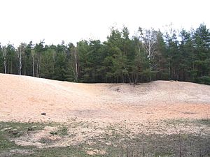 "Inland dune - Inland dunes on the Franconian ""Sand Axis"" north of Nuremberg"