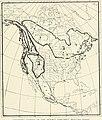 Bird-lore (1907) (14775479843).jpg