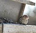 Bird and Stash, Cloud Bay (3316327774).jpg