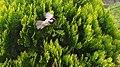 Bird fly.jpg