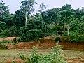 Bisons near sagar Karnataka.jpg