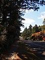 Blackheath - panoramio.jpg