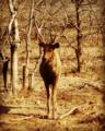 Blinking deer.png