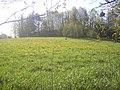 Bocian na łące) - panoramio.jpg