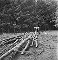 Bosbewerking, arbeiders, boomstammen, werkzaamheden, Bestanddeelnr 253-5188.jpg