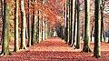 Bosserweg in herfst sfeer - panoramio.jpg