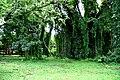 Botanic garden limbe38.jpg