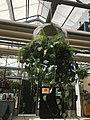 Botanische tuinen Utrecht 64.jpg