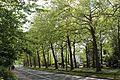 Boulevard du Souverain, Watermael-Boitsfort 2017-06 --1.jpg