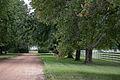 Boxwood Plantation Main Drive.jpg