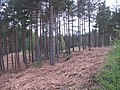Braelangwell Wood - geograph.org.uk - 794811.jpg