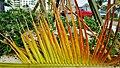 Branche de palmier au sol, beau décor improvisé^ - A palmtree fallen branch, gives nice colors - panoramio.jpg