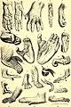 Brehms Tierleben - allgemeine Kunde des Tierreichs - mit 1800 Abbildungen im Text, 9 Karten und 180 Tafeln in Farbendruck und Holzschnitt (1890) (20405654192).jpg