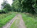 Bridleway near Cowgrove - geograph.org.uk - 1471121.jpg