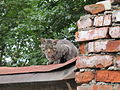 Brown cat on the roof.jpg