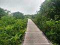 Bukit Lima Nature Reserve 1.jpg