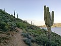 Butcher Jones Trail - Mt. Pinter Loop Trail, Saguaro Lake - panoramio (25).jpg