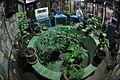 Butterfly Garden - Science City - Kolkata 2016-01-08 8829.JPG