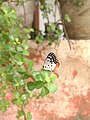 Butterfly on a plant.jpg