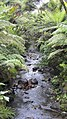 Byers Walk, Waitakere Ranges, North Island - panoramio (6).jpg