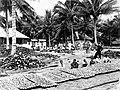COLLECTIE TROPENMUSEUM Arbeiders bewerken kokosnoten voor koprabeiding TMnr 10012505.jpg