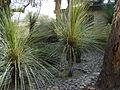 Cadereyta Botanical garden (5761471578).jpg