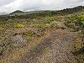 Camino - panoramio (43).jpg