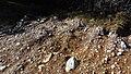 Canadian Dump (Mar Lodge Estate) (22SEP12) (12).jpg