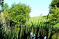 Canal east of Kintbury - geograph.org.uk - 1340785.jpg