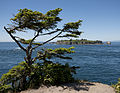 Cape Flattery (7788924156).jpg