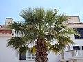 Cascais, coastal town (27831477347).jpg
