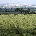 Castelvetrano Province of Trapani - panoramio.jpg