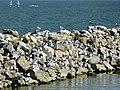 Castiglione del Lago - Lago Trasimeno 3c.jpg